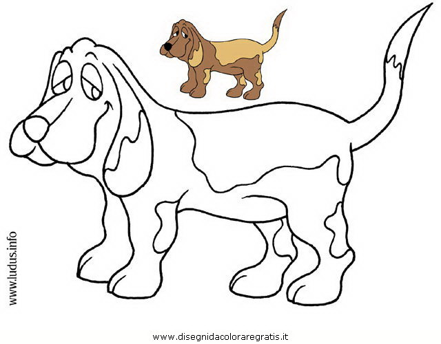 animali/cani/cane.JPG
