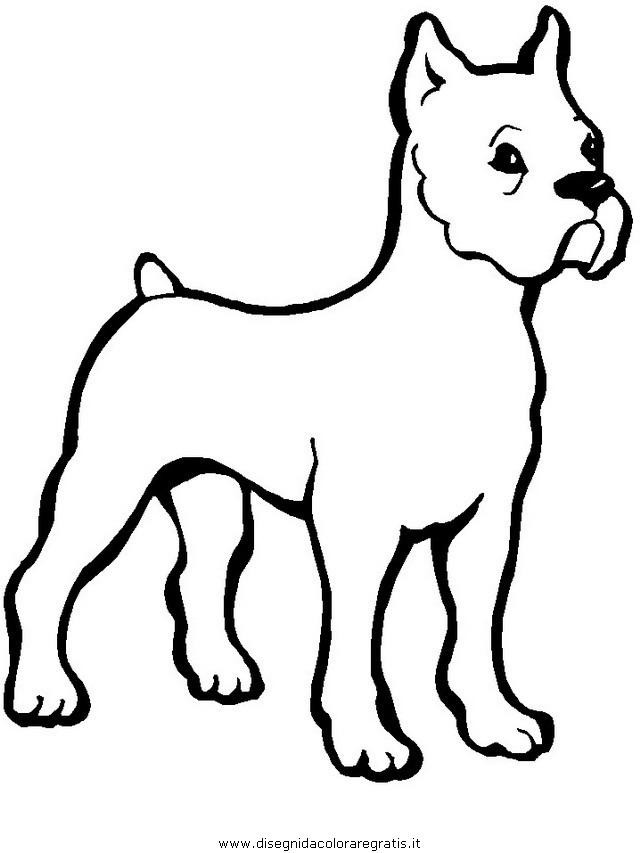 animali/cani/cane_013.JPG