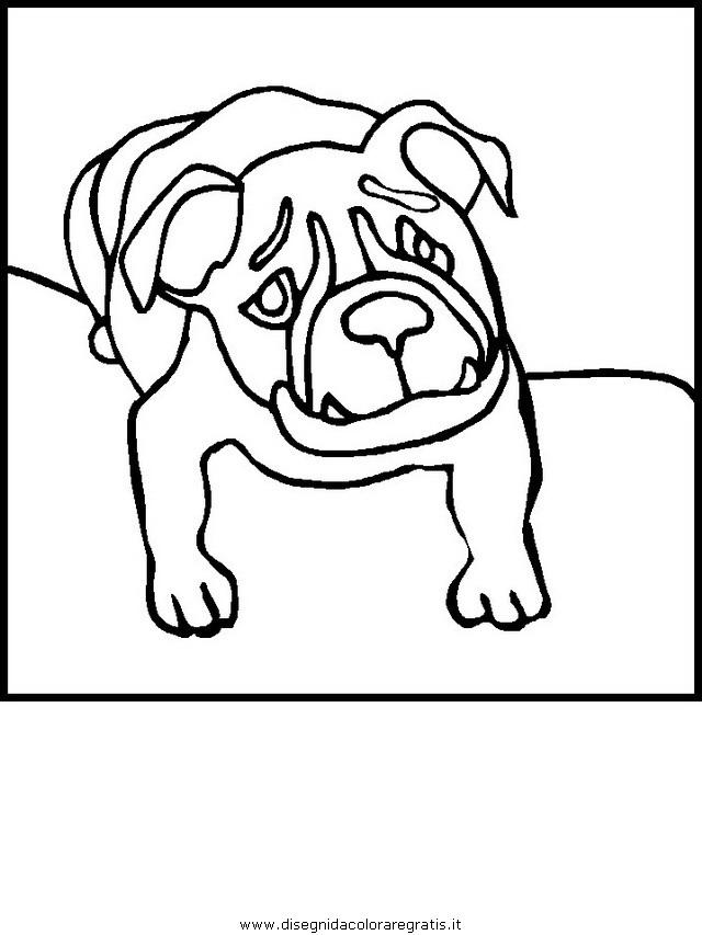 animali/cani/cane_014.JPG