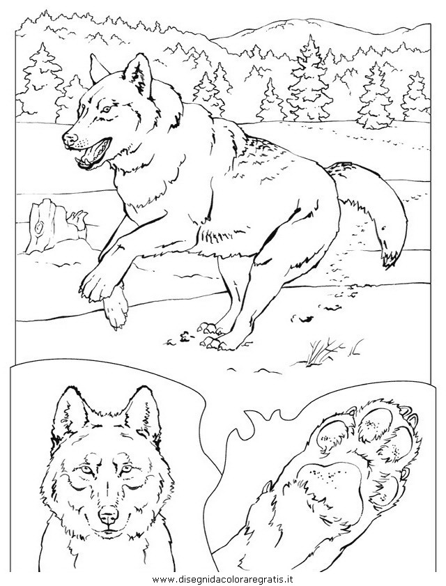 animali/cani/cane_040.JPG