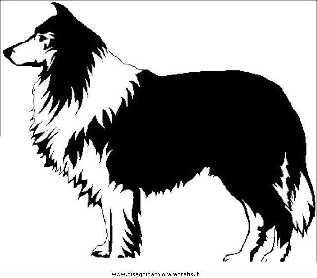 animali/cani/cane_052.JPG