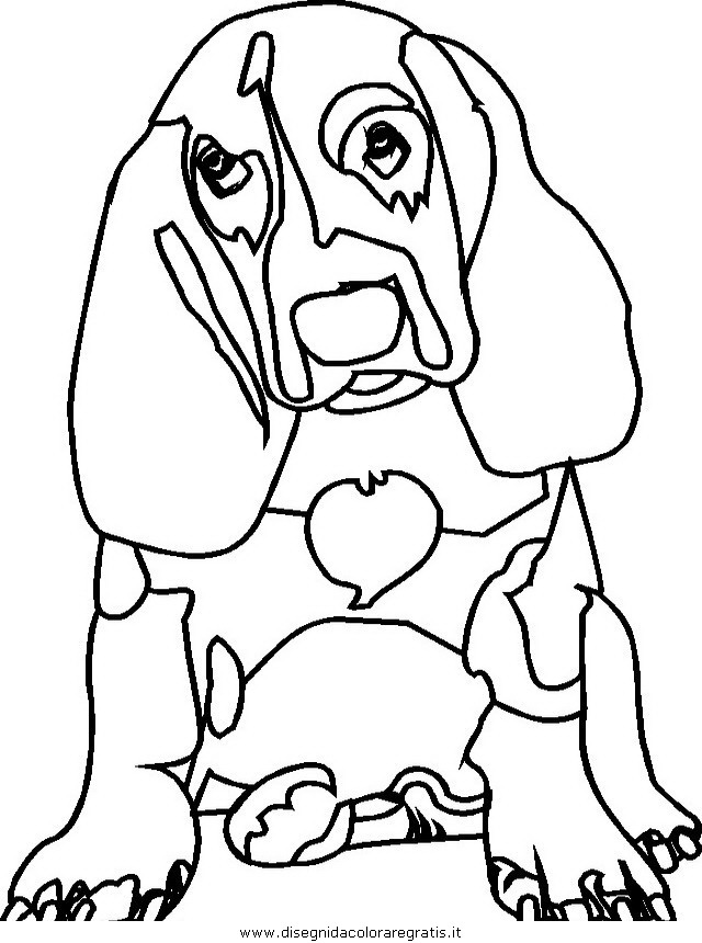 animali/cani/cane_078.JPG