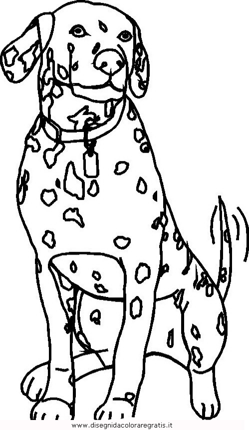 animali/cani/cane_080.JPG