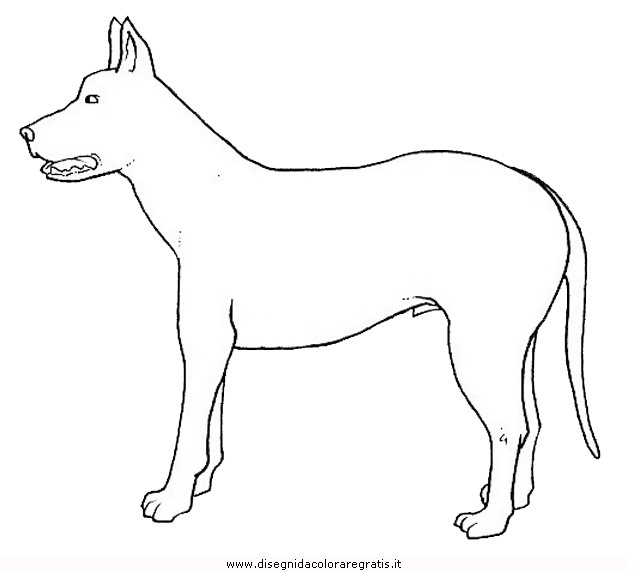 animali/cani/cane_087.JPG