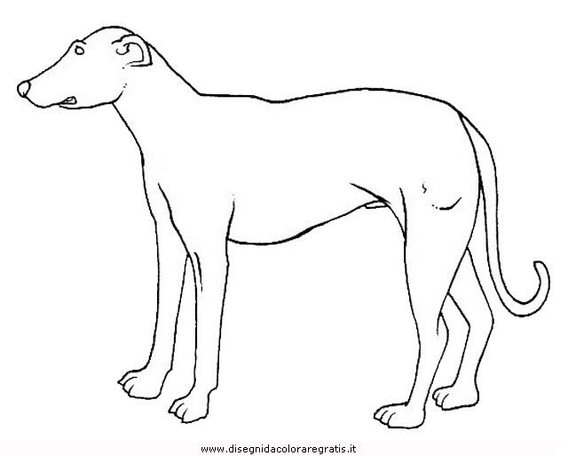 animali/cani/cane_088.JPG