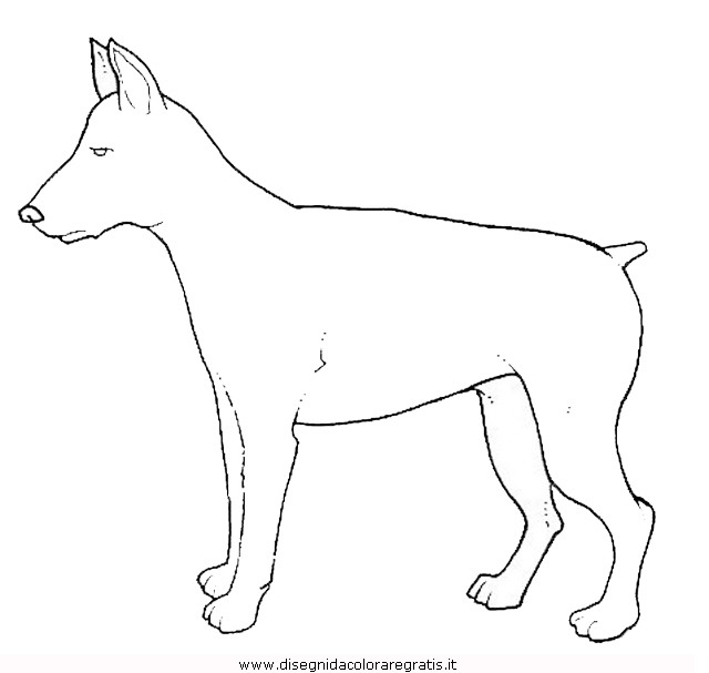 animali/cani/cane_089.JPG