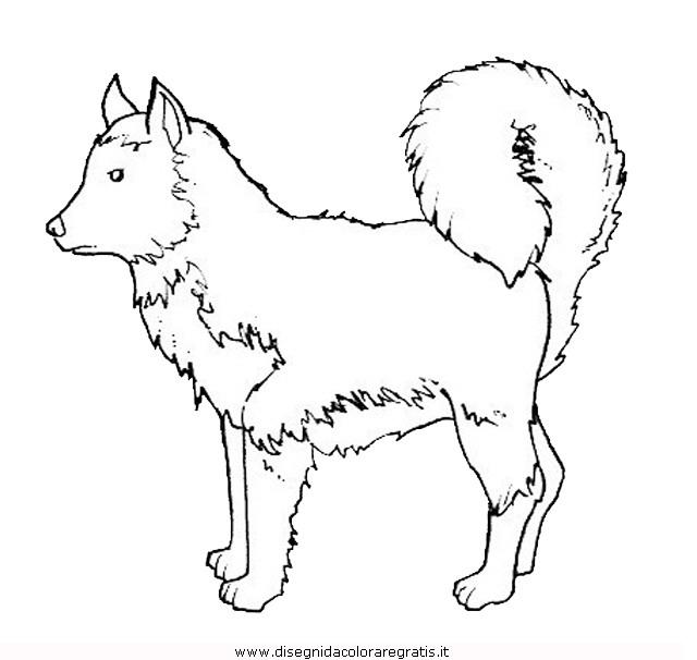 animali/cani/cane_090.JPG