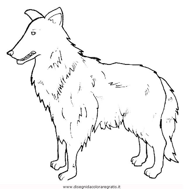 animali/cani/cane_092.JPG