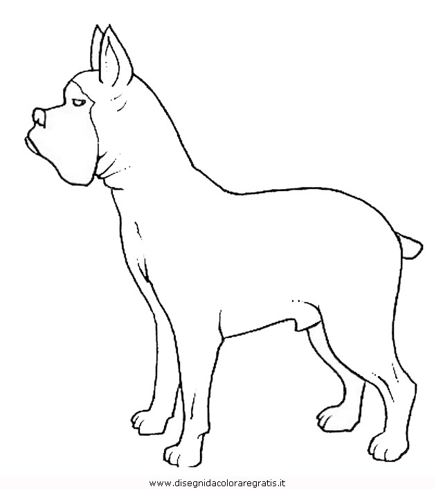 animali/cani/cane_093.JPG