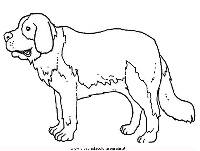animali/cani/cane_094.JPG