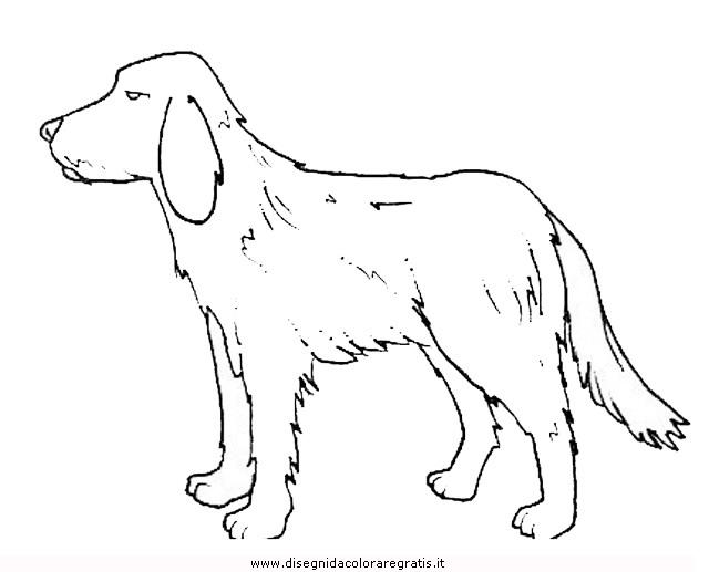 animali/cani/cane_096.JPG