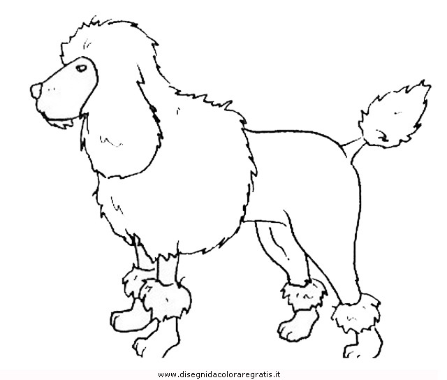 animali/cani/cane_097.JPG