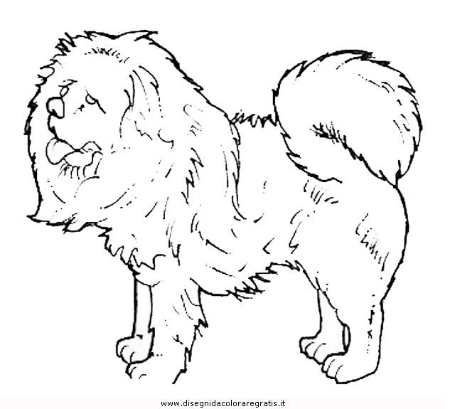 animali/cani/cane_099.JPG