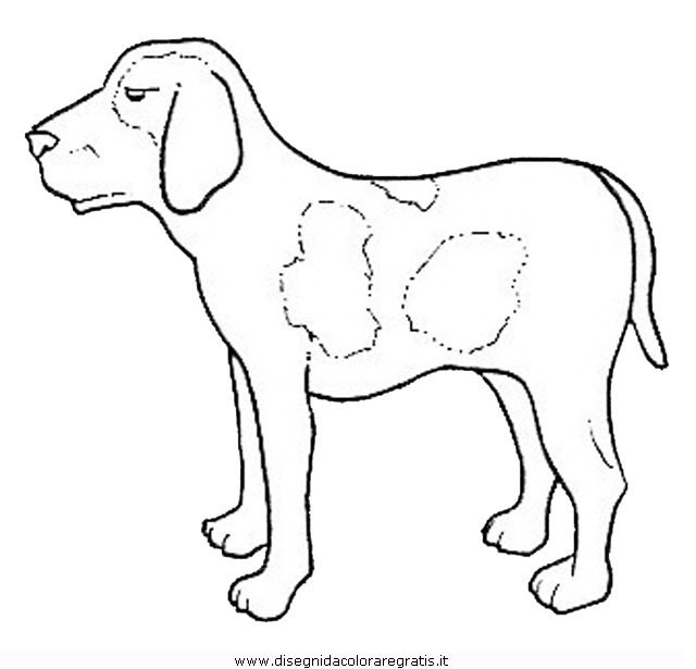 animali/cani/cane_103.JPG