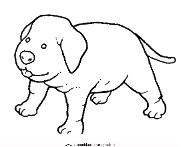 animali/cani/cane_105.JPG