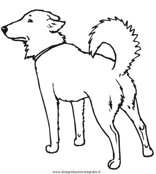 animali/cani/cane_160.JPG