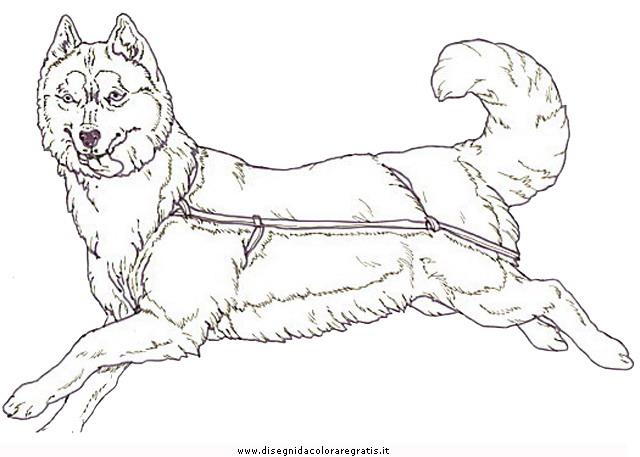animali/cani/cani_a10.JPG
