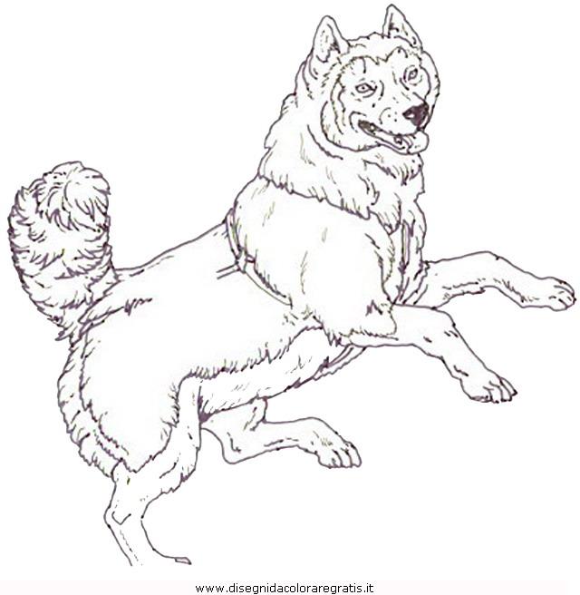 animali/cani/cani_a7.JPG