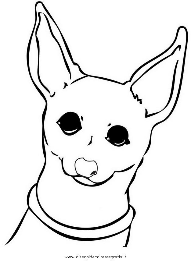 animali/cani/chihuahua_10.JPG