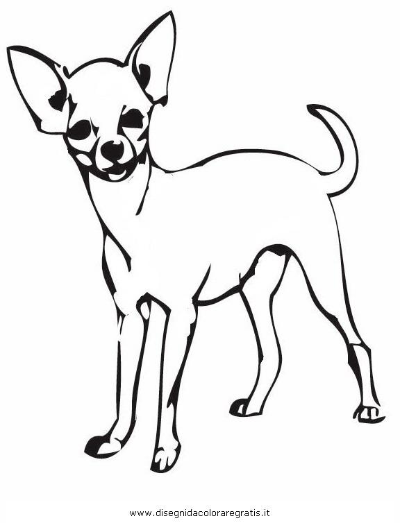 animali/cani/chihuahua_6.JPG