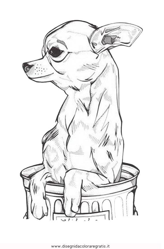 animali/cani/chihuahua_7.JPG