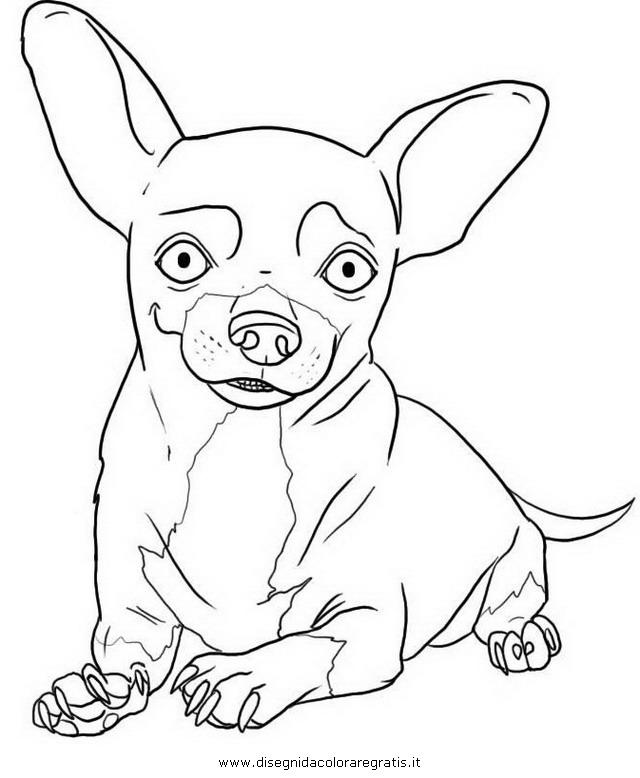 animali/cani/chihuahua_8.JPG