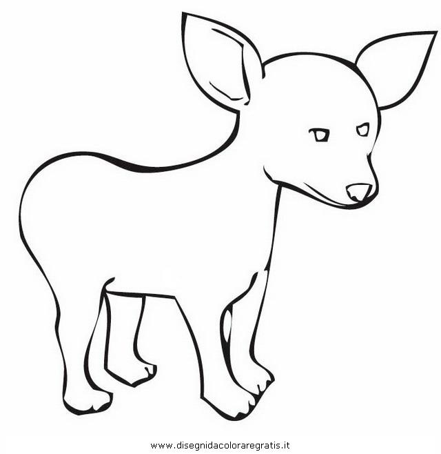 animali/cani/chihuahua_9.JPG