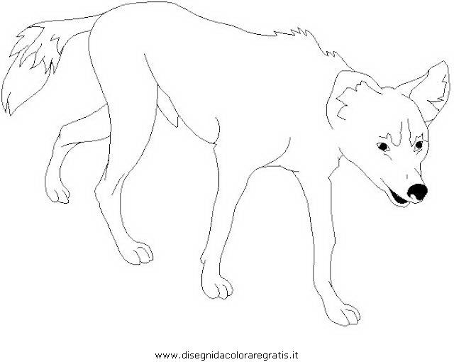 animali/cani/dingo_1.JPG