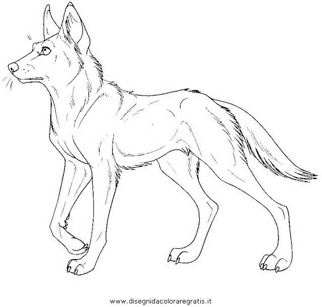 animali/cani/dingo_2.JPG