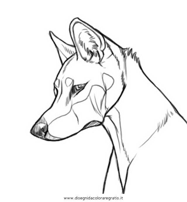 animali/cani/dingo_3_p01.JPG