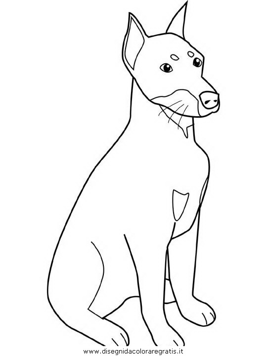 animali/cani/doberman.JPG