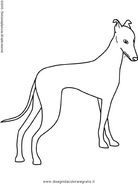 animali/cani/greyhound.JPG