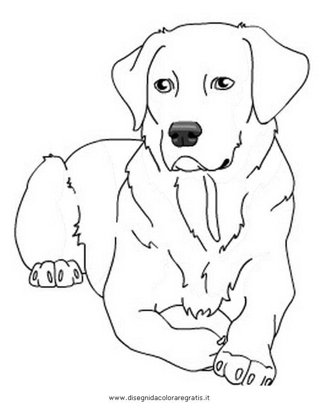 animali/cani/labrador_2.JPG