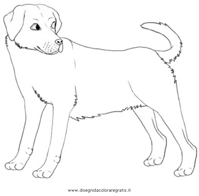 labrador retrievers coloring pages - photo#25