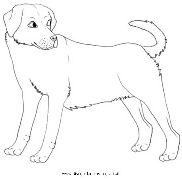 Disegno labrador 3 animali da colorare for Disegno gatto facile