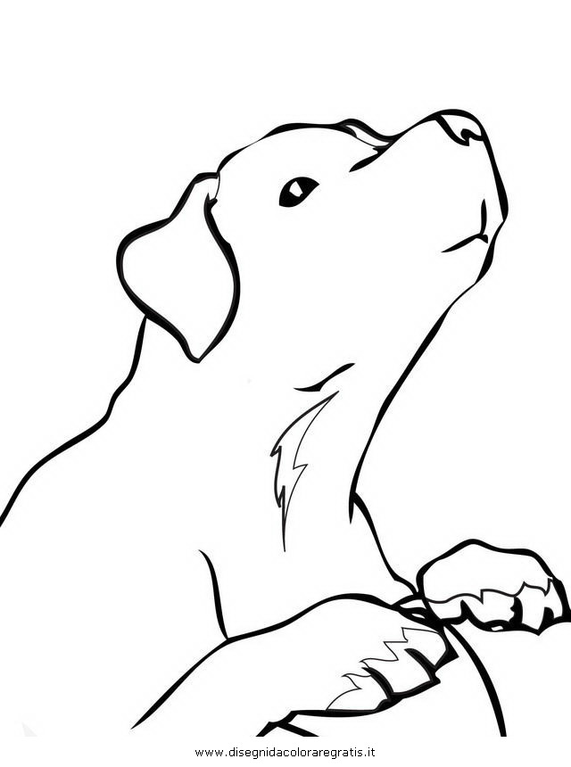 animali/cani/labrador_retriever.JPG