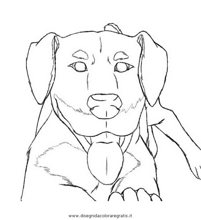 animali/cani/rottweiler_2.JPG