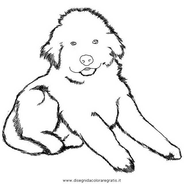 Disegno terranova 3 animali da colorare for Cane disegno da colorare