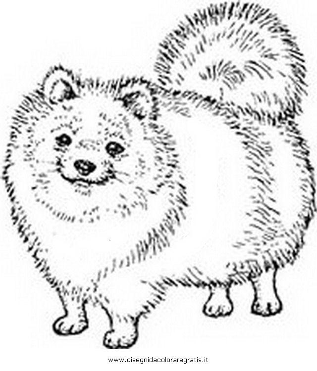 Disegno volpino animali da colorare for Disegni da stampare e colorare di cani