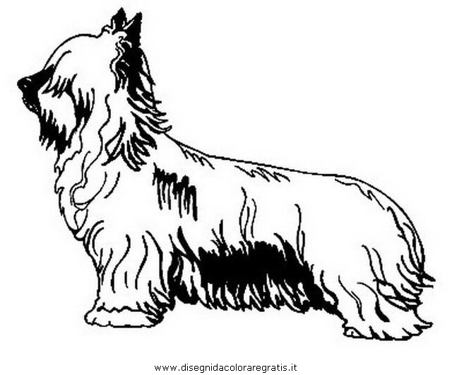 animali/cani/yorkshire_terrier.JPG