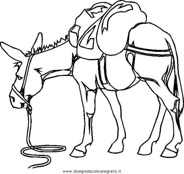 animali/cavalli/cavallo_01.JPG
