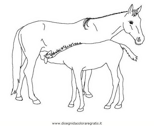 animali/cavalli/cavallo_097.JPG