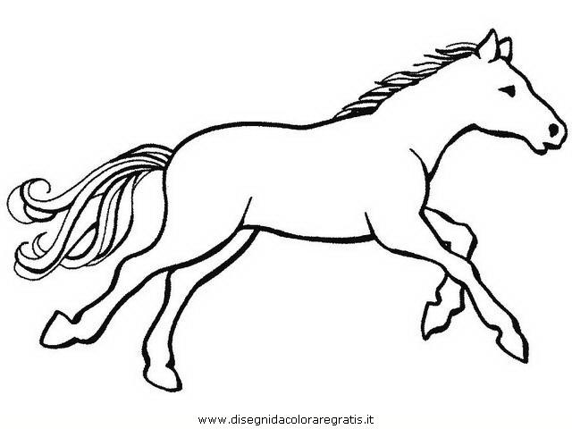 animali/cavalli/cavallo_098.JPG