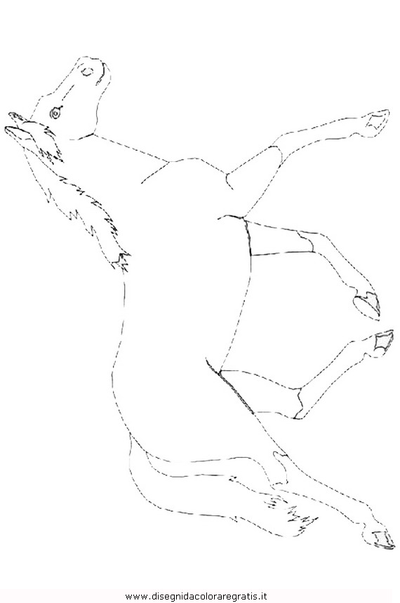 animali/cavalli/cavallo_101.JPG