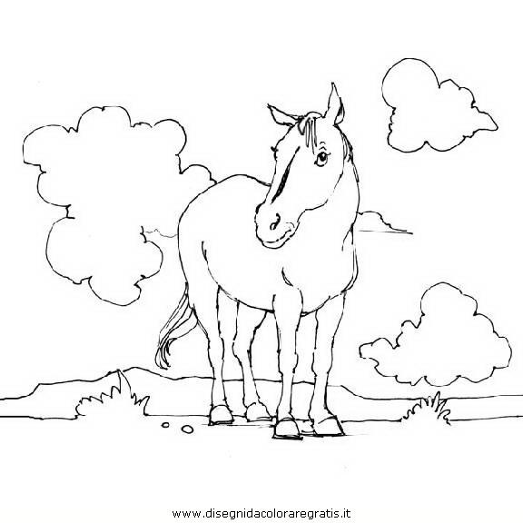 animali/cavalli/cavallo_104.JPG