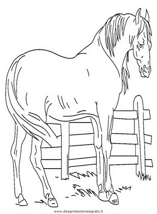 animali/cavalli/cavallo_106.JPG