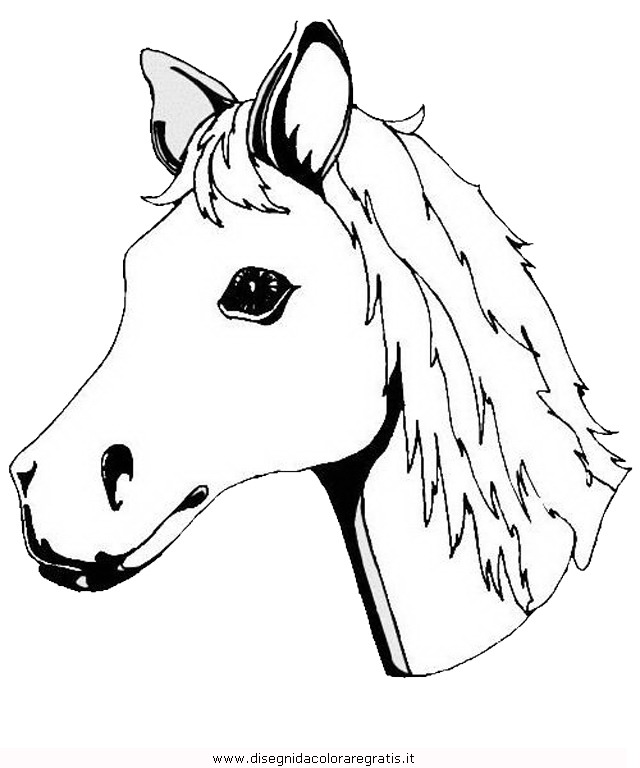 animali/cavalli/cavallo_107.JPG