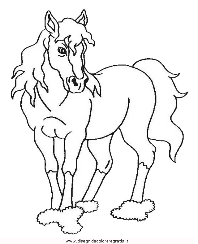 animali/cavalli/cavallo_109.JPG