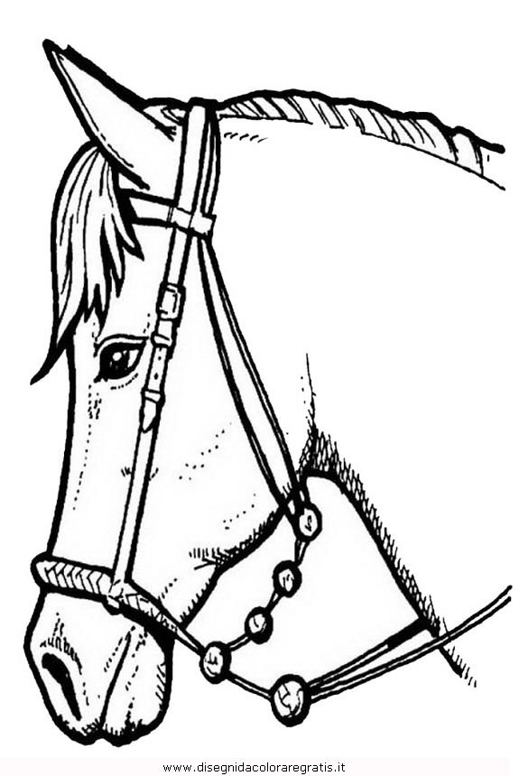 animali/cavalli/cavallo_110.JPG