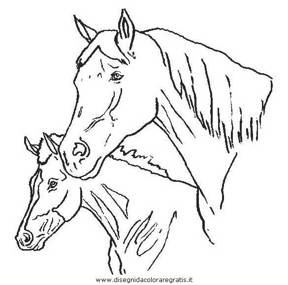 animali/cavalli/cavallo_114.JPG